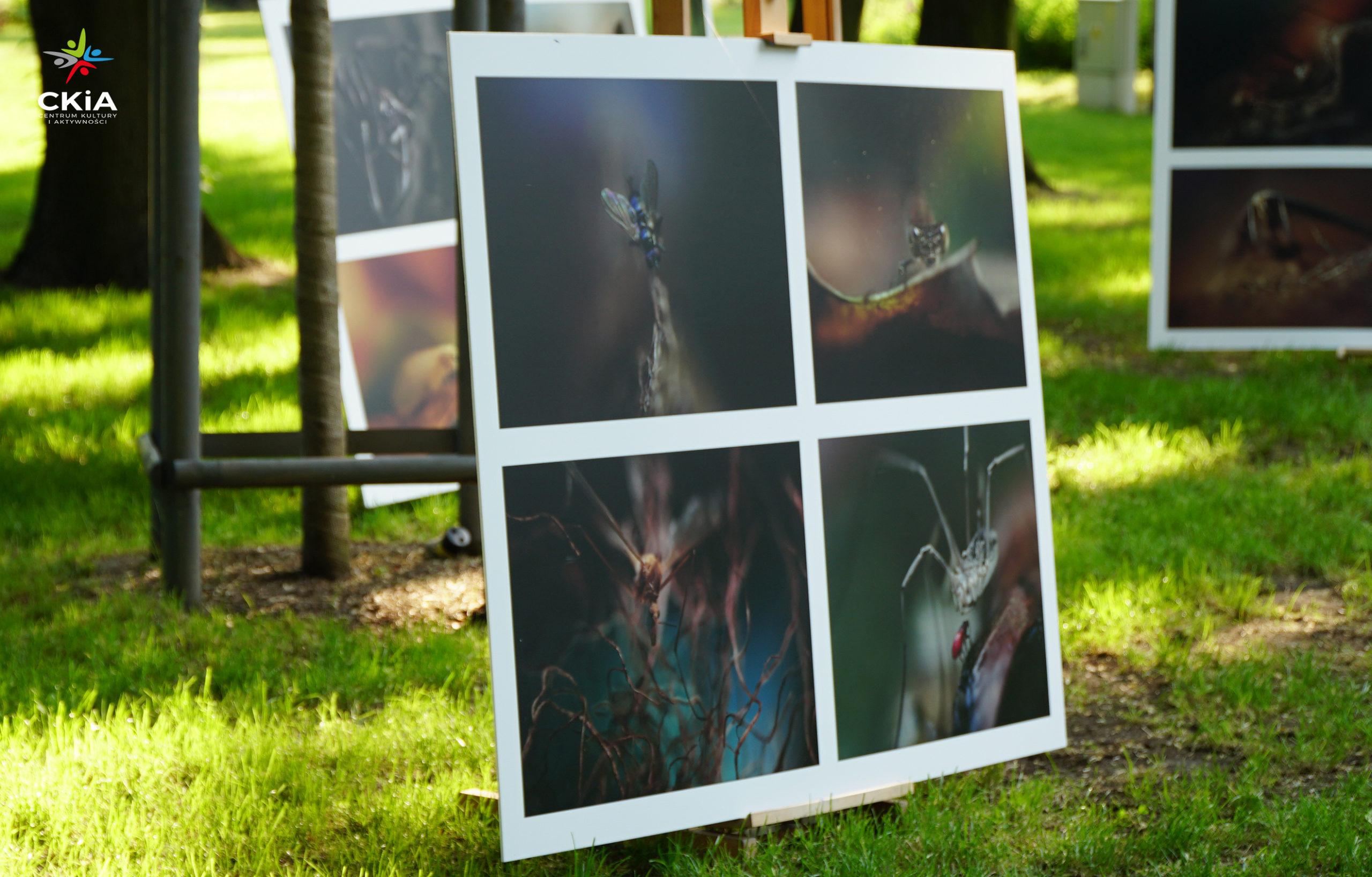 Wystawa fotografii autorstwa Jerzego Kryszaka.